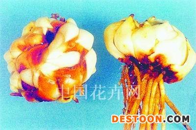 如何防治百合种球和鳞片腐烂?